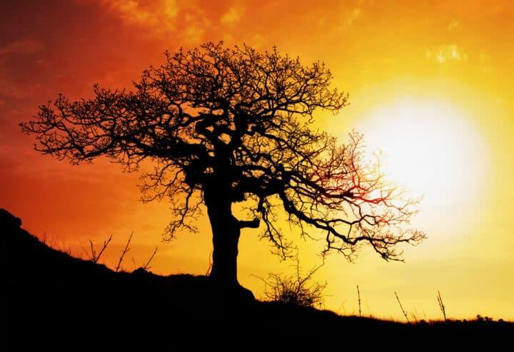Afrique ENR soleil